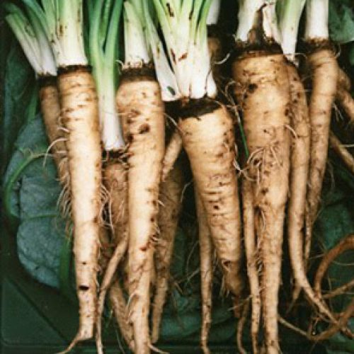 Eetbare wortels
