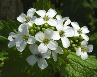 bloemen van look zonder look